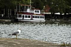 Poser (jimiliop) Tags: seagull bird boat water lake dock trees nature ioannina looking posing