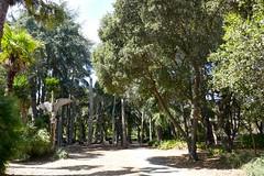 Papua New Guinea Sculpture Garden, Stanford University (ali eminov) Tags: papuanewguineasculpturegarden stanforduniversity paloalto california woodart sculptures papuanewguinea