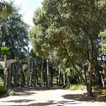 Papua New Guinea Sculpture Garden, Stanford University thumbnail