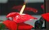 strahlende Schönheit - magnificent beauty (Jorbasa) Tags: jorbasa hessen wetterau germany deutschland blume flower plant pflanze blüte blossom blätter leave schöhneit beauty