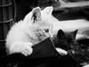 3992 - Giulio (Diego Rosato) Tags: giulio gatto cat kitten gattino animale animal pet fuji x30 rawtherapee bianconero blackwhite