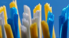 Macro Mondays - Toothbrush (Normann Photography) Tags: 212018 macromondays readyfortheday closeup macro toothbrush tønsberg vestfold norway no