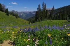 The Trail (akortrey) Tags: grandteton wyoming grandtetonnationalpark wilderness mountains forest trees wildflowers alpine tetoncresttrail
