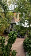 2018-04-26_09-10-12 (Kaemattson) Tags: theernesthemingwayhomeandmuseum hemingway house key west florida keys tropical garden