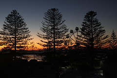 Sunrise at The Entrance (RossCunningham183) Tags: theentrance centralcoast nsw australia sunrise fairground ferriswheel trees silhoutte