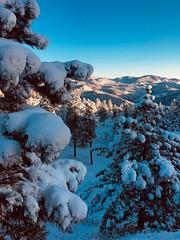 April Snow Showers (rogerbrownphoto) Tags: sunrise trees rockymountains storm snow mountains colorado