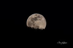 Full Moon Rising Over Pheasant Ridge (Terry Aldhizer) Tags: full moon rising over pheasant ridge april night roanoke virginia terry aldhizer wwwterryaldhizercom