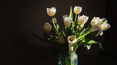 19.04.2018 (Fregoli Cotard) Tags: tulips stress spring white whitetulips whiteflowers flowers floral floralinspo deliciousdarkdecor caravaggio flowerdecoration ikebana dailyjournal dailyphotography dailyproject dailyphoto dailyphotograph dailychallenge everyday everydayphoto everydayphotography everydayjournal aphotoeveryday 365everyday 365daily 365 365dailyproject 365dailyphoto 365dailyphotography 365project 365photoproject 365photography 365photos 365photochallenge 365challenge photodiary photojournal photographicaljournal visualjournal visualdiary 109365 109of365
