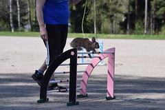 DSC_0066 (klawerjanina) Tags: bunnyjump bunny kani kanin kanihoppning kaniestekisat