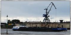 TMS NEWTON (rasafo66) Tags: duisburg rhein binnenschiff rheinschiff nrw nordrheinwestfalen deutschland canonsx260
