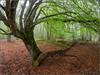 Reverencia al bosque (Nufus) Tags: olympus omdem1 zd8mm naturaleza bosque verde hojas arbol niebla