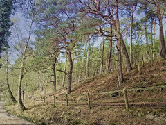 Brownsea Island No27 - Copy (iankellybn26dj) Tags: dorset england spring nature landscape photo trees woods woodland