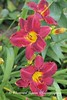 Benton Daylilly Farm (56) (Framemaker 2014) Tags: benton daylily farm garden flowers columbia county pennsylvania endless mountains united states america