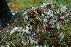 OpalHiills00022 (jahNorr) Tags: summertrip 2012 fungilichen canadaalbertajaspernationalparkopalhills
