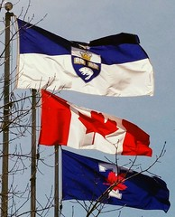 University of Toronto, Canadian, Varsity Blues flags (Will S.) Tags: mypics bloor annex varsityblues universityoftoronto toronto ontario canada uoft flags