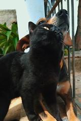 #animais #gato #cachorro #love (carlostenório) Tags: gato cachorro love animais