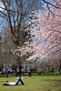 under the cherry blossoms (jenny_guo) Tags: tree people outdoor spring boston chill life x xpro2 zeiss carlzeiss cherryblossom cherry flower flowers pink color touit1832