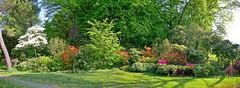 Parc du Denantou (Diegojack) Tags: lausanne vaud suisse d7200 panorama assemblage parc denantou rhododendrons couleurs printemps