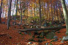 Felsenmeer0028 (schulzharri) Tags: deutschland germany odenwald wald ausen outside forrest wood sun sky