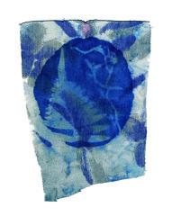 (luizavidotto) Tags: cianotipia cianotype azul blue botanic plantas laço cadarço fio abstract abstrato paisagem natureza textura tecido papel luva tinta fotografia histórica laboratório