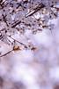 ILCE-7M2-07553-20180423-1743-HDR // Canon FD 300mm 1:4L (Otattemita) Tags: 300mmf4 canonfd canonfd300mmf4l canonfdn canonnewfd canonnfd florafauna fauna flora flower nature plant wildlife canonfd300mm14l sony sonyilce7m2 ilce7m2 300mm