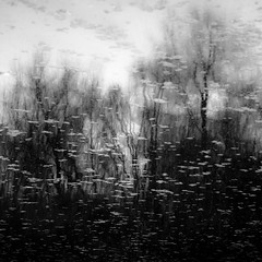 Trees In Water 125 (noahbw) Tags: captaindanielwrightwoods d5000 desplainesriver dof nikon abstract blackwhite blackandwhite blur branches bw depthoffield forest monochrome natural noahbw reflection river spring square trees water woods landscape treesinwater