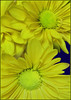 (Cliff Michaels) Tags: photoshop pse9 iphone8 flowers