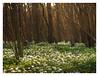 Fairytale (PhotoKaton) Tags: forest flowers tale fairytale soft lowangle flickrfriday