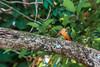 I see a fish (bobbyloomba) Tags: india wildlife birds naturalhistory kingfisher