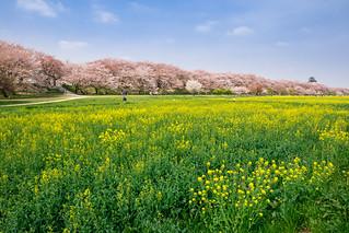 Yellow/Pink Collaboration (Satte, Saitama, Japan)