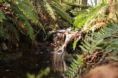 Little Waterfall (Forest Light Nature Photography) Tags: river ferns