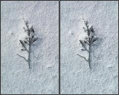 across bay 13 (Robbie1) Tags: tremblant spring ice stereo crosseye twigs melt