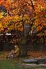 Autumnal tones (tinmarmade) Tags: newzealand nouvellezélande voyage travel queenstown nikonnz yellow jaune colorfull street rue man homme autumn autonne tree arbre