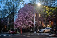 Day 36: 04.30.2018 (Joe Schulz) Tags: project365 50mm newyorkcity newyork nyc ny newyorklife brooklyn prospectheights prospectheightsbrooklyn