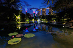 The CyberBioPhysical System (Zur@imiAbro@d) Tags: singapore bluehour twilight marinabaysands lights supergrovetrees fountain lotuslake lotus cyber skyline water lake reflections zurimiabrod