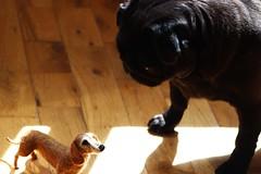 sausage? (adore62) Tags: brightondogs needlefelteddog feltedfido felteddog pug