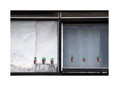 Lévitation (hélène chantemerle) Tags: fenêtres rideaux images potsdefleurs blanc noir bleu windows curtains pictures flowerpot black white blue