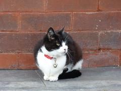 Cat - Fleetwood 180216 (maljoe) Tags: cat cats fleetwood lancashire