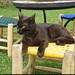 The Anima Garden cat