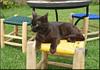 The Anima Garden cat (mhobl) Tags: cat blackcat black yellow green blue hocker gras tisch garten maroc morocco marrakech animagarden andreheller heller