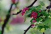 a pink blossom (kinaaction) Tags: sonyilce6000 pink blossom branches leaves nature green bokeh spring