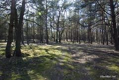 Волинський ліс InterNetri Ukraine 2041887595