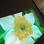 Optoma SUHD60 thumbnail