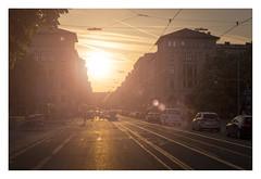 Maximiliansstraße. (Anscheinend) Tags: münchen munich monaco bayern bavaria deutschland germany street maximiliansstrase sunset lensflair sonnenuntergang backlight ocaso tramonto coucherdesoleil summer warm