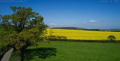 True spring (Ollie_57.. Slowly catching up) Tags: landscape view vista fields lane road sky trees shadow hbm scenery crops rapeseed spring may 2018 mamhead devon england uk westcountry phantom4pro djifc6310 affinityphoto ollie57