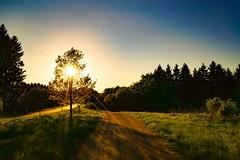 Abendstimmung im Nationalpark Eifel (clemensgilles) Tags: frühling spring wälder bäume trees nationalparkeifel sonnenuntergang sunset eifel deutschland germany