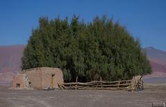 Casa de adobe (Marina-Inamar) Tags: carachipampa argentina catamarca piedra adobe casa construcción plantas cerco corral textura