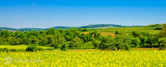 Streuobstwiesen (Markus Lenz) Tags: abstatt bildformat deutschland diewelt europa feld felder fotografie landschaft naturlandschaft orte panorama panoramaschnitt pflanze pflanzen rapsfeld streuobstwiese wald wiese bäume obstbäume badenwürttemberg schwäbischetoskana wälder