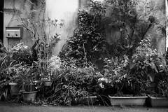 路地 (fumi*23) Tags: ilce7rm3 sony 35mm sonnartfe35mmf28za sel35f28z monochrome blackandwhite bw kagoshima street alley zeiss plant 路地 鹿児島 モノクロ 植物 ソニー
