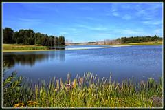 Пейзаж (vikkay) Tags: костромскаяобласть сендега пруд вода берег небо лес пейзаж камыш трава лето отдых